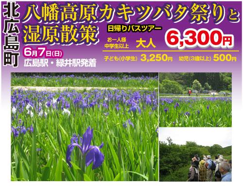 八幡高原カキツバタ祭り