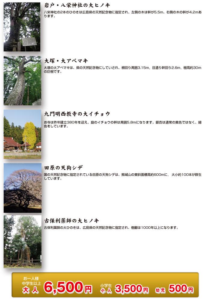 bigtree2